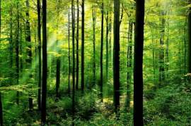 What are Environmental Protection Easements