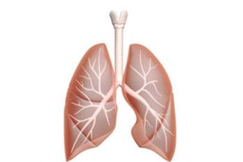 Asbestos Lung Cancer