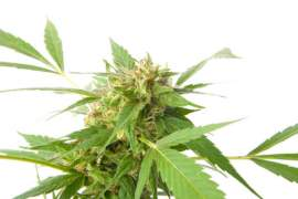 5 Facts that you didn't Know About Marijuana